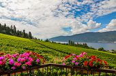 Okanagan Vineyard with flower baskets