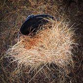 Hay in bucket