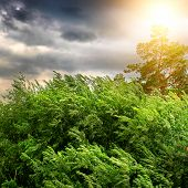 stock photo of windy weather  - Nature Landscape with Windy Stormy Weather and the Sunlight - JPG