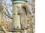 Upside down squirrel
