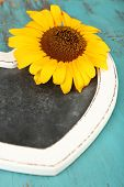 Beautiful sunflower blackboard blank on wooden background