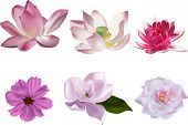 illustration with collection of pink flowers isolated on white background