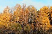 Colorful Autumn Landscape, Forest Background
