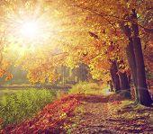 Vintage autumnal landscape in the sunset