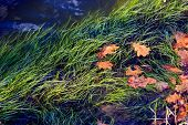 driftweed in river water - abstract natural background