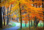 Beautiful biking path in autumn time