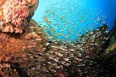 Glassfish