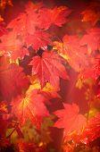 Autumn at Westonbirt Arboretum - abstract leaf design