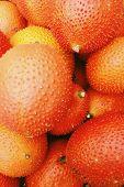 Baby Jackfruit in the market