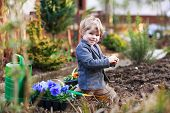 stock photo of  plants  - Blond boy of 2 years having fun with gardening and planting vegetable plants and flowers in garden outdoors - JPG