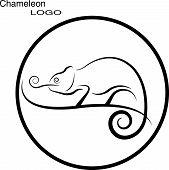 picture of chameleon  - Chameleon - JPG
