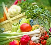 stock photo of vegetables  - Fresh organic vegetables on table close-up and wickerbasket full of vegetables