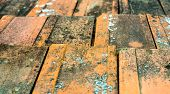 picture of lichenes  - Old dirty orange roof tiles with moss and lichen - JPG
