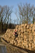 pic of lumber  - Young lumber engineer standing with laptop on cut trunks - JPG
