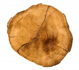 stock photo of cutting trees  - Annual tree growth rings of the cross - JPG