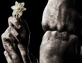 foto of clenched fist  - Set of hand with flower and clenched fist - JPG