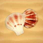stock photo of scallop shell  - Sea shells - JPG