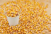 picture of bucket  - White bucket with corn on the wooden floor as a background - JPG