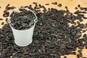 foto of bucket  - White bucket with sunflower seeds on the wooden floor as a background - JPG