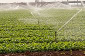 stock photo of sprinkler  - Above ground irrigation system water pump through pipe too sprinkler heads to water the crops - JPG