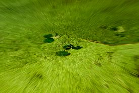 image of algae  - Small forest water algae pond in the shady late summer forest under the trees - JPG