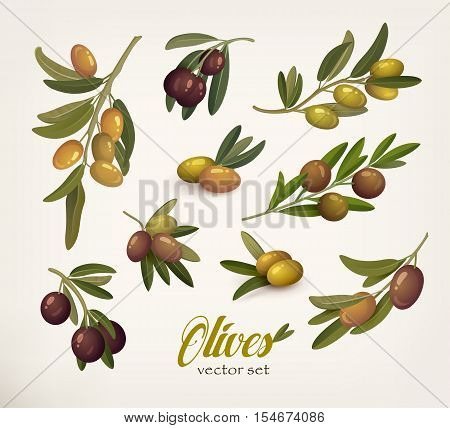 poster of Set of green and black olive branches with twig. Bleak on olive berries with stem. May be used for olive oil bottle sticker or vegetarian olive food, botany book olive vector illustration