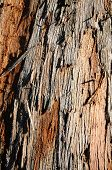Close Up Crisp Detail Of Bark On Tree For Background Texture
