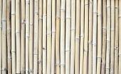 Bamboos background