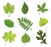 Set of leaves of various trees