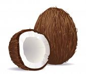Coconut. Vector.