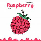 Raspberry Vector Illustration, Berry Clipart. Cartoon Raspberry Vector Illustration For Logo, Design poster