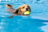 Dog Retrieving A Toy And Playing In Pool At Splash Challenge poster