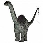 Apatosaurus Dinosaur On White 3d Illustration - Apatosaurus Was A Herbivorous Sauropod Dinosaur That poster