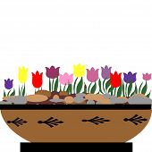 Tulips in bowl