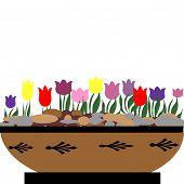 Tulips in bowl