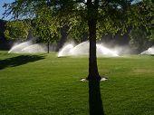 Sprinklers In The Park
