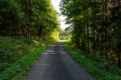 Cycling In Nature Forest On A Rainy Day. Road In Forest Nature. Green Forest Road. Nature. Road. Nat poster