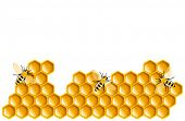 Honey bees and honeycombs