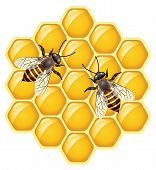 Vector Bees On Honeycells