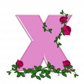 stock photo of climbing roses  - The letter X in the alphabet set Blushing Roses is soft pink - JPG