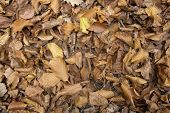 Sere Autumn Leaves