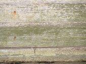 Moldy Wood Siding