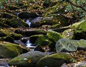 Small Mossy Cascade. poster