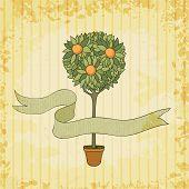 orange tree in the pot