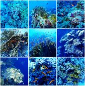 Underwater Sea Collage