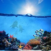 Underwater scene. Coral reef, colorful fish groups, sharks and sunny sky shining through clean ocean