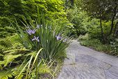 Slate Stone Garden Path With Oregon Irises