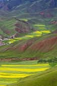 Oilseed Terraced Field