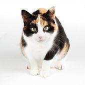 Gato olhando curioso para o Camear, isolado no branco