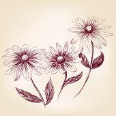 Beautiful Flower daisies  vector illustration